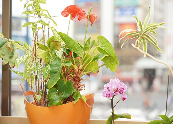新小岩駅 南口徒歩1分 早川歯科医院の院内写真4