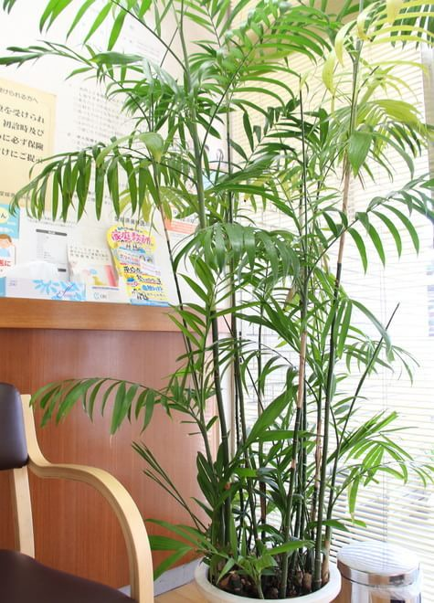 古町駅 出口徒歩 1分 日浅歯科医院の院内写真5